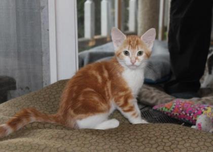Fern-Kitten
