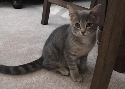 Ameena-Kitten