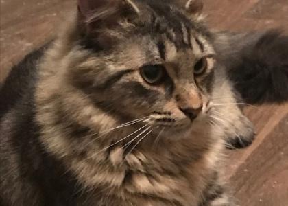 Bobby-special needs Kitten