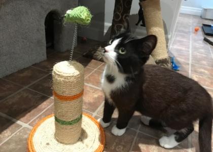 Maxwell-Pending adoption