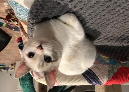 Celeste-Kitten