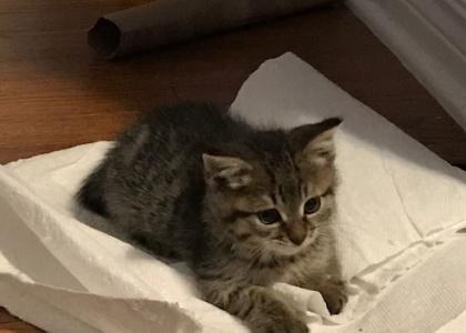 Kelly- Kitten