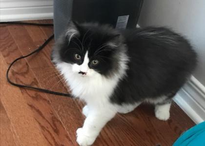 Cory-Kitten