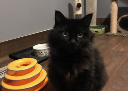 Matilda-Not yet available