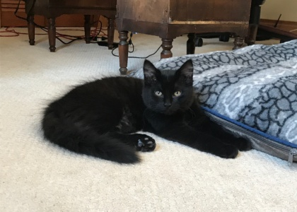 Lou Lou- Pending Adoption