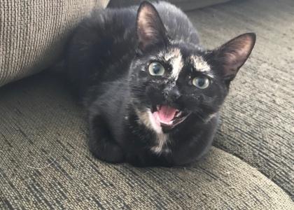 Kitkat-Kitten
