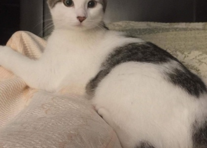 IO-Kitten