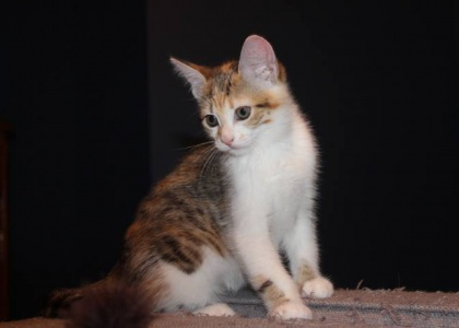 Daisy-Kitten