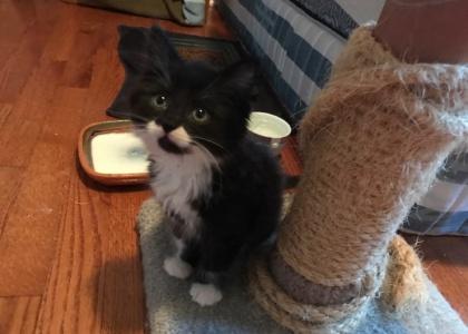 Boots-Kitten